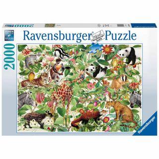 Puzzle Jungle, 2000st.